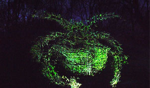 Our Woods - Magical Creatures In The Woods - Light Drawings